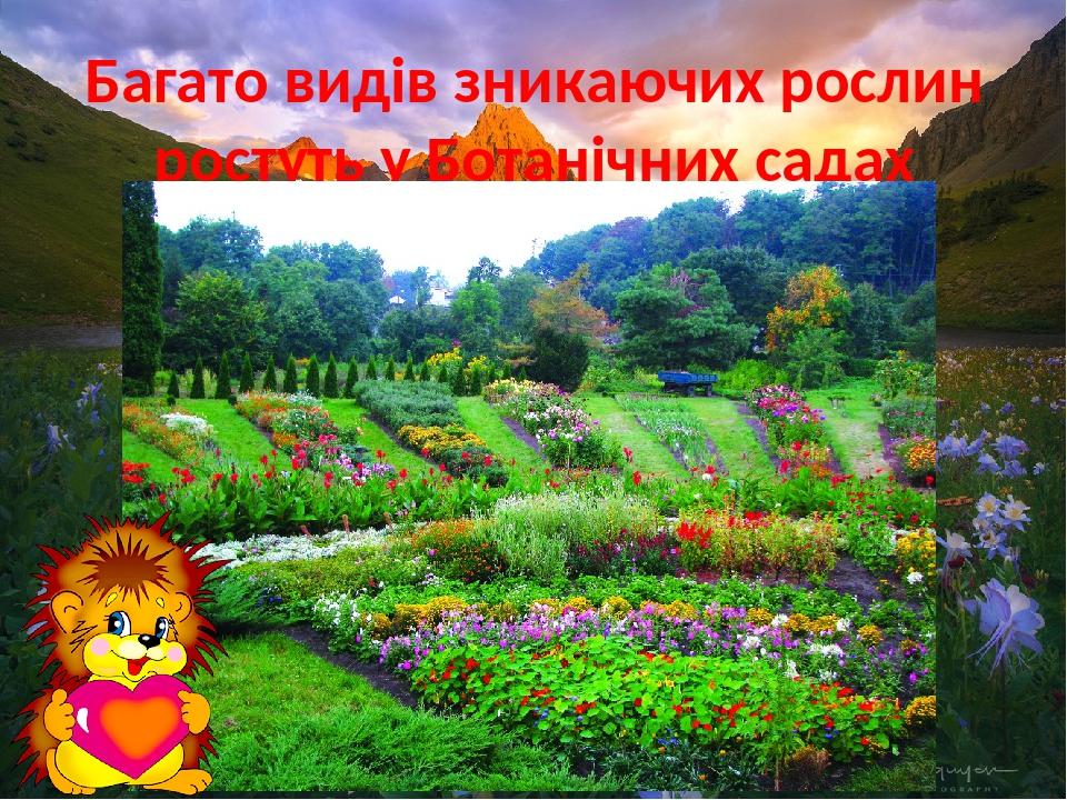 Багато видів зникаючих рослин ростуть у Ботанічних садах України