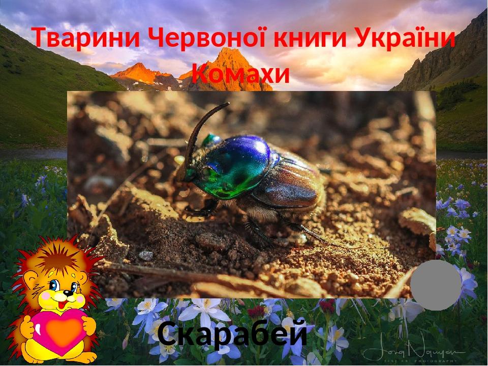 Тварини Червоної книги України Комахи Скарабей