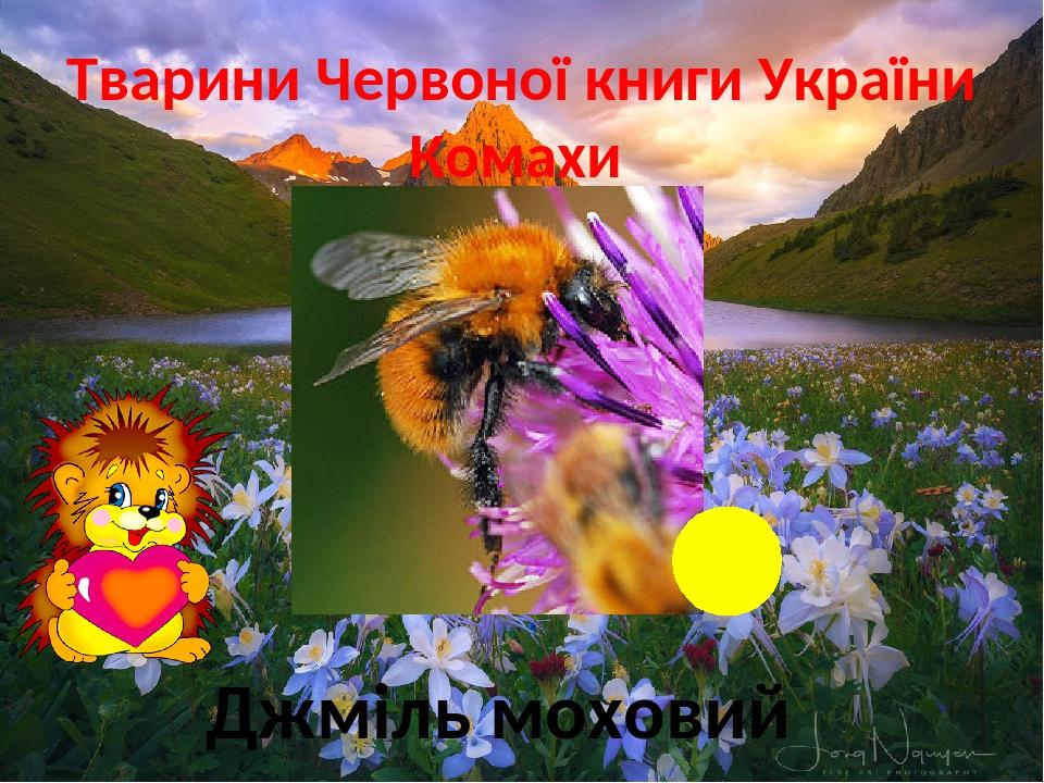 Тварини Червоної книги України Комахи Джміль моховий