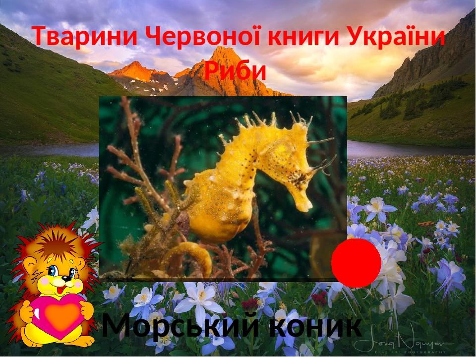 Тварини Червоної книги України Риби Морський коник