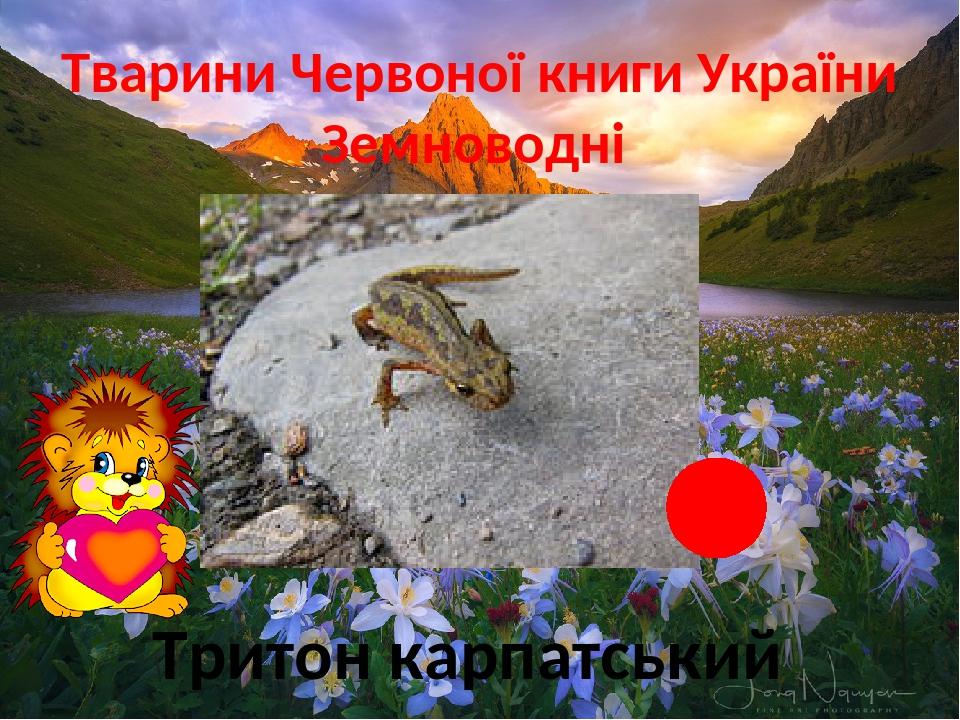 Тварини Червоної книги України Земноводні Тритон карпатський