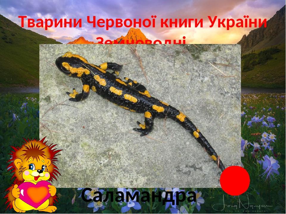 Тварини Червоної книги України Земноводні Саламандра