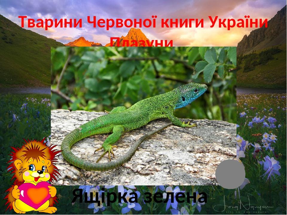 Тварини Червоної книги України Плазуни Ящірка зелена
