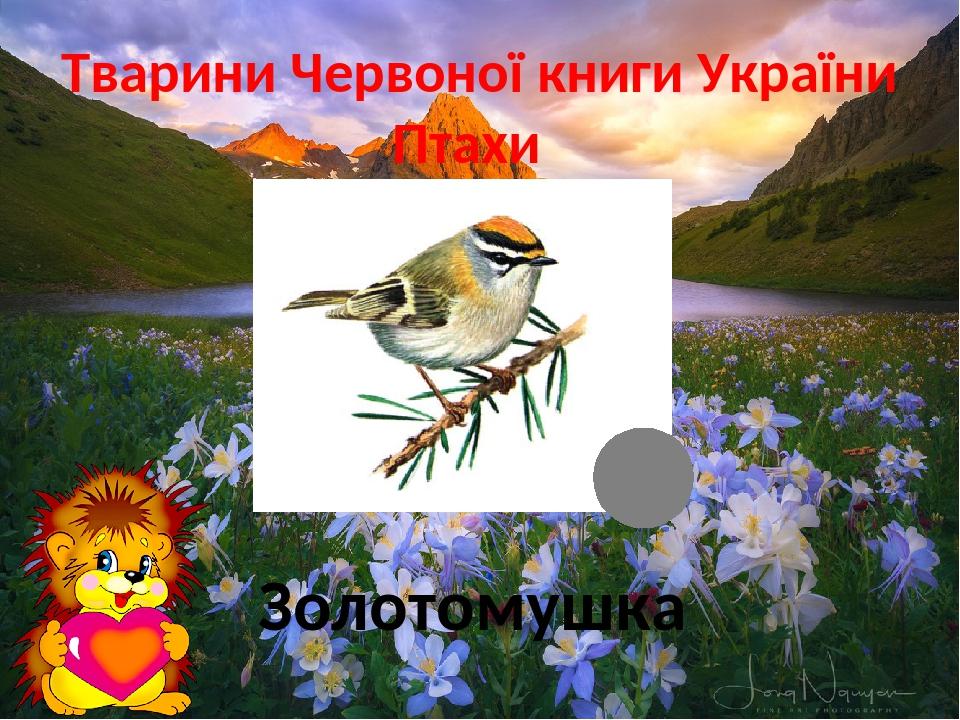 Тварини Червоної книги України Птахи Золотомушка