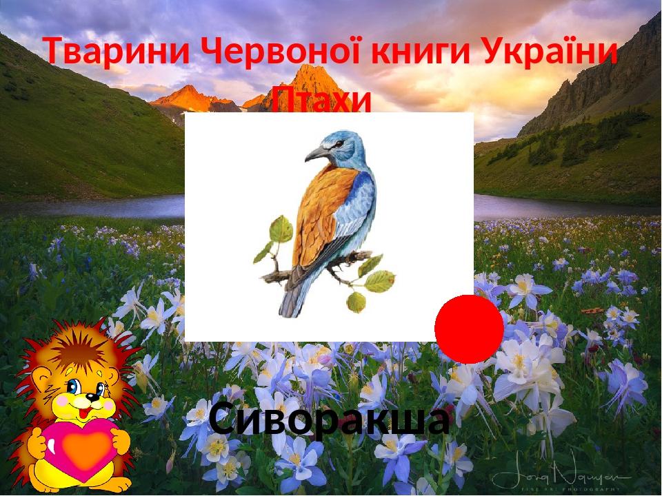 Тварини Червоної книги України Птахи Сиворакша