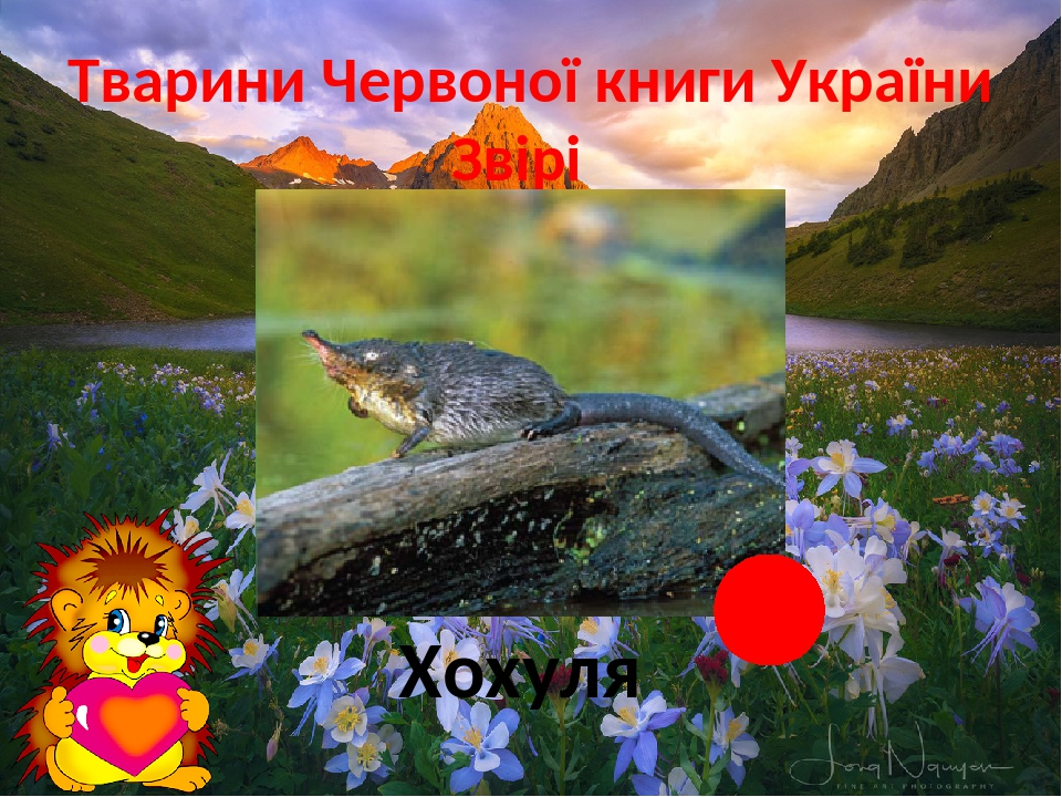 Тварини Червоної книги України Звірі Хохуля