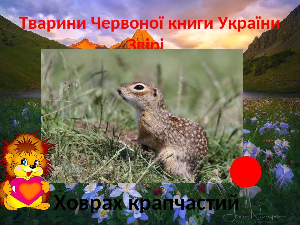 Тварини Червоної книги України Звірі Ховрах крапчастий