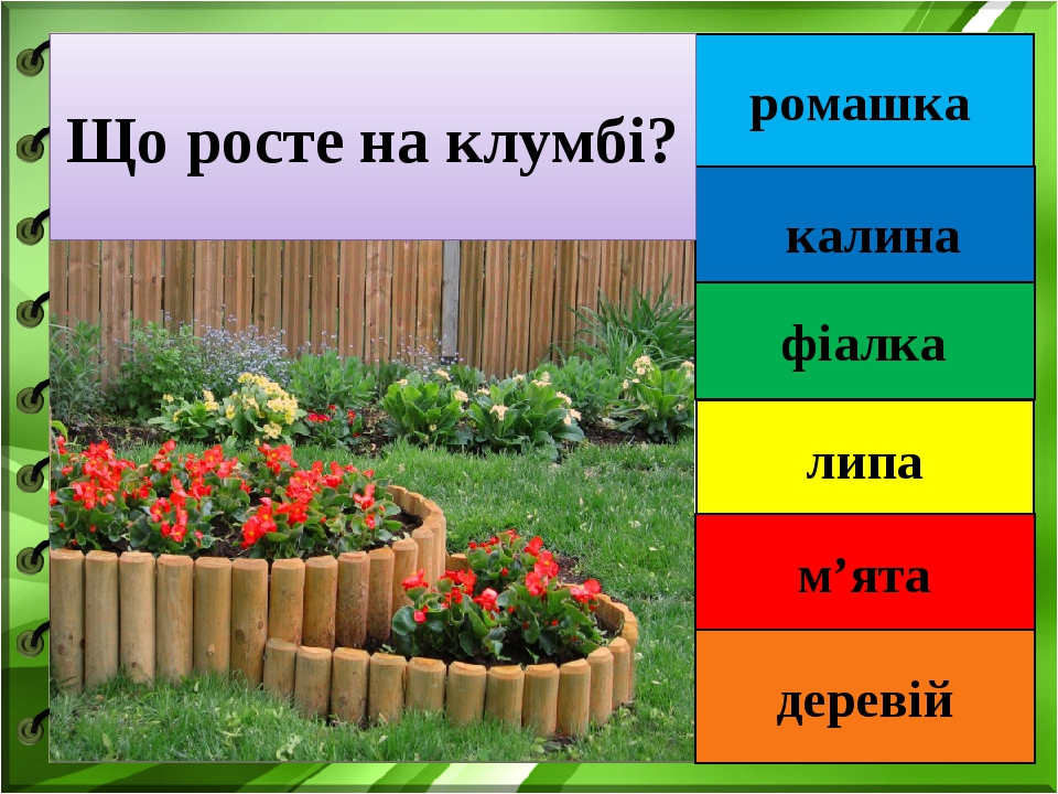 """Тематичний тиждень """"Світ рослин"""". Дидактична гра """"Де живуть рослини?"""""""