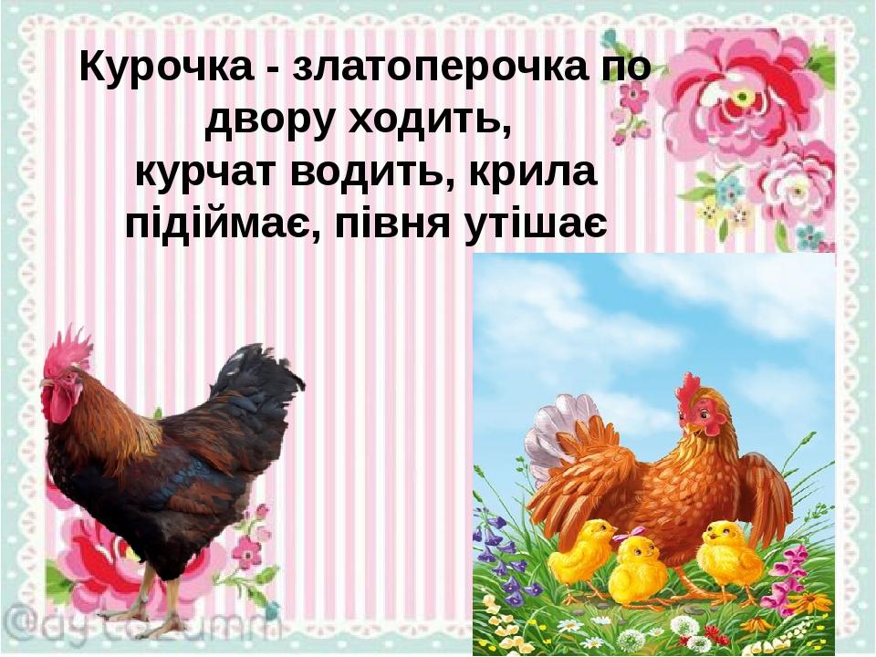 Курочка - златоперочка по двору ходить, курчат водить, крила підіймає, півня утішає