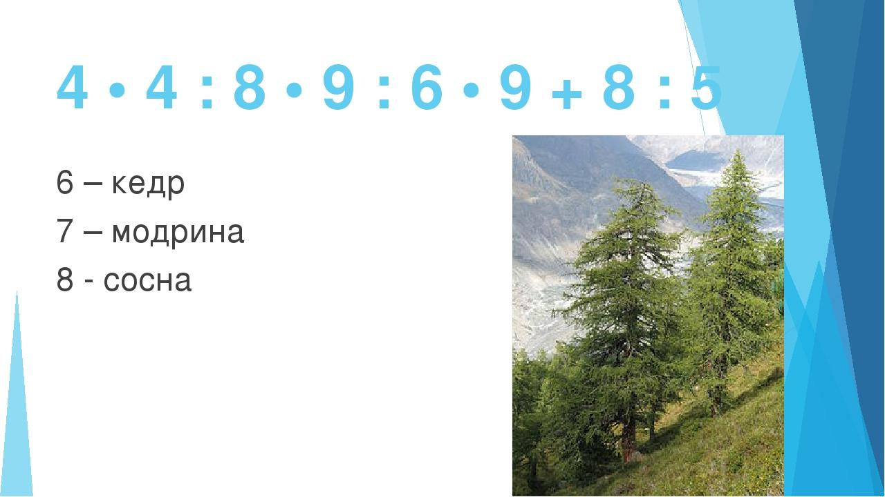 4 • 4 : 8 • 9 : 6 • 9 + 8 : 5 6 – кедр 7 – модрина 8 - сосна