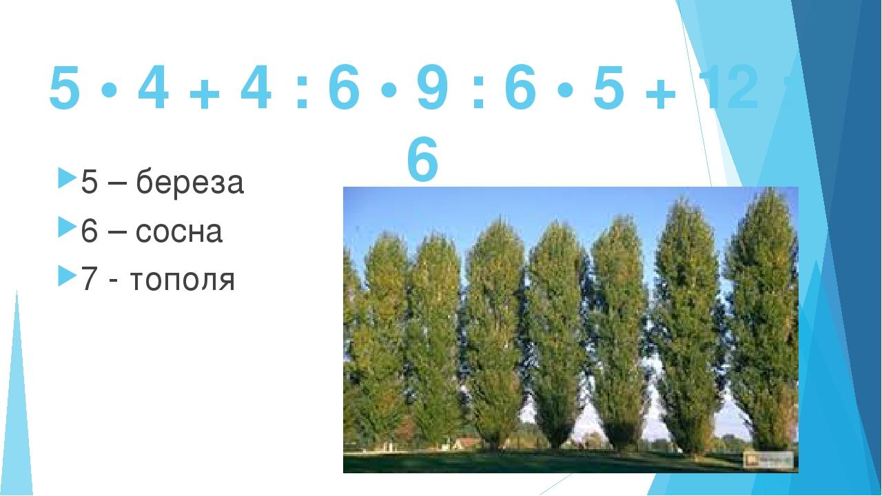 5 • 4 + 4 : 6 • 9 : 6 • 5 + 12 : 6 5 – береза 6 – сосна 7 - тополя