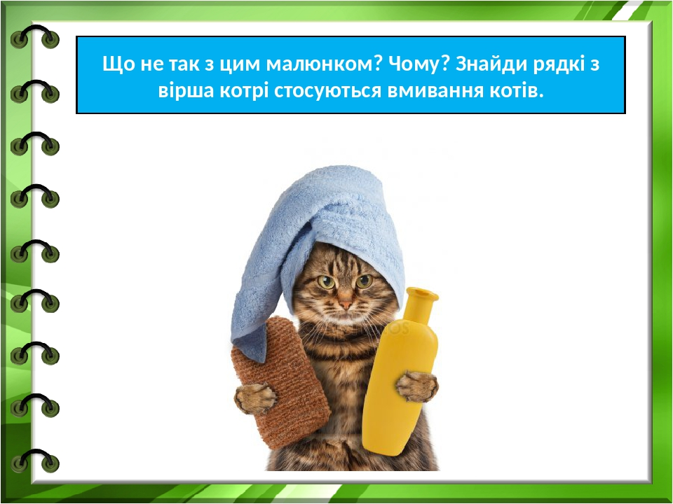 Що не так з цим малюнком? Чому? Знайди рядкі з вірша котрі стосуються вмивання котів.