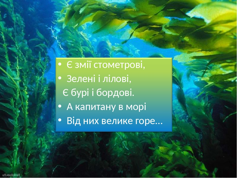Сліпчук І.Ю.