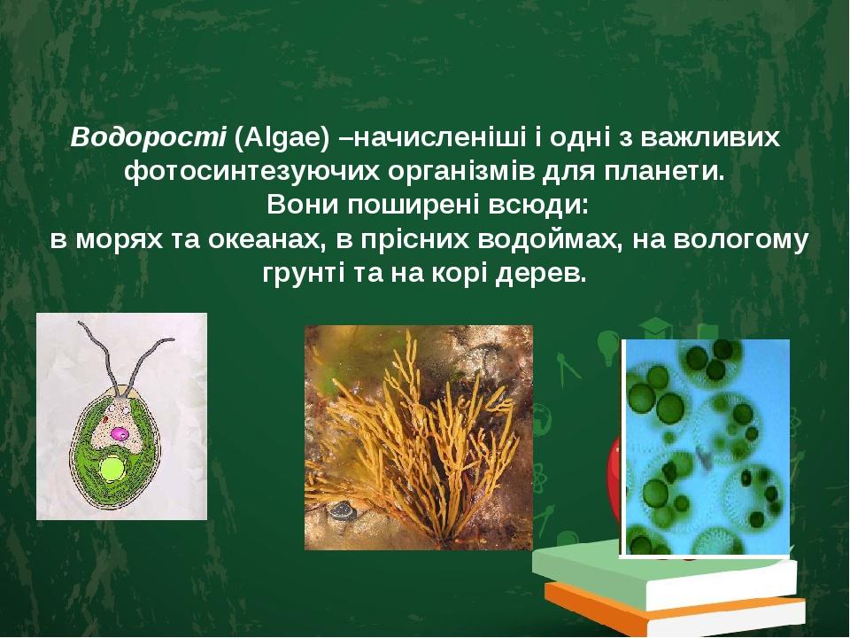 Водорості (Algae) –начисленіші і одні з важливих фотосинтезуючих організмів для планети. Вони поширені всюди: в морях та океанах, в прісних водойма...
