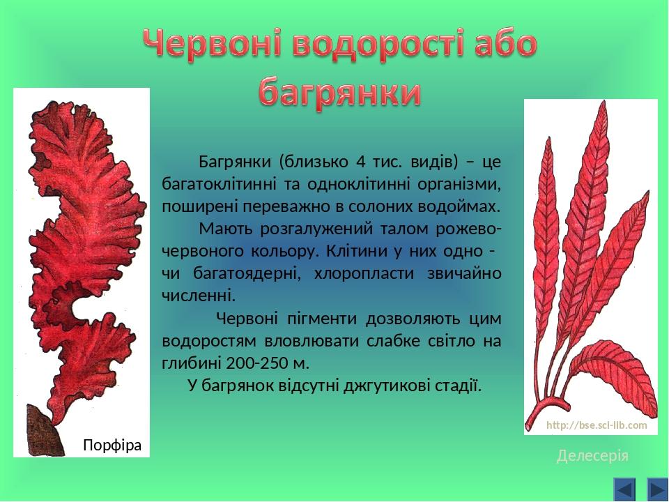 Багрянки (близько 4 тис. видів) – це багатоклітинні та одноклітинні організми, поширені переважно в солоних водоймах. Мають розгалужений талом роже...
