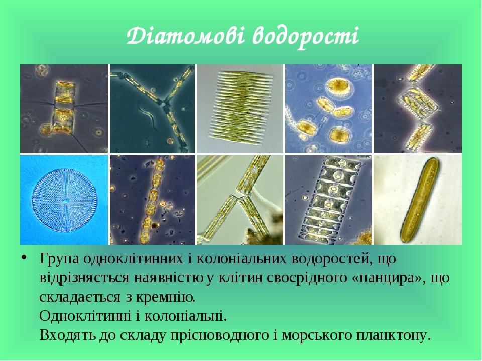 Діатомові водорості Група одноклітинних і колоніальних водоростей, що відрізняється наявністю у клітин своєрідного «панцира», що складається з крем...