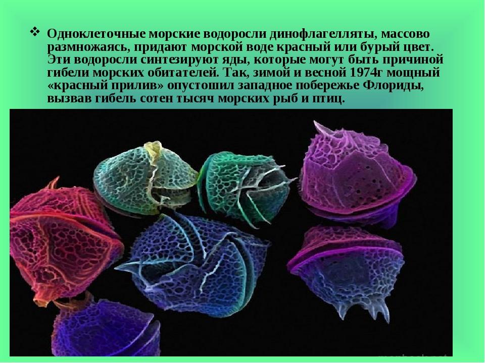 Одноклеточные морские водоросли динофлагелляты, массово размножаясь, придают морской воде красный или бурый цвет. Эти водоросли синтезируют яды, ко...