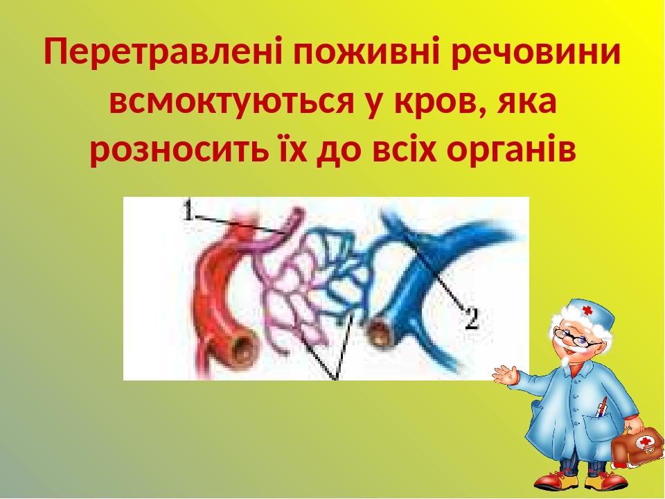 Перетравлені поживні речовини всмоктуються у кров, яка розносить їх до всіх органів