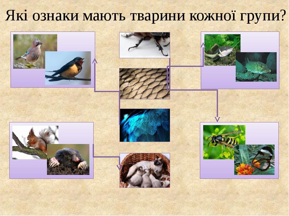 Які ознаки мають тварини кожної групи?