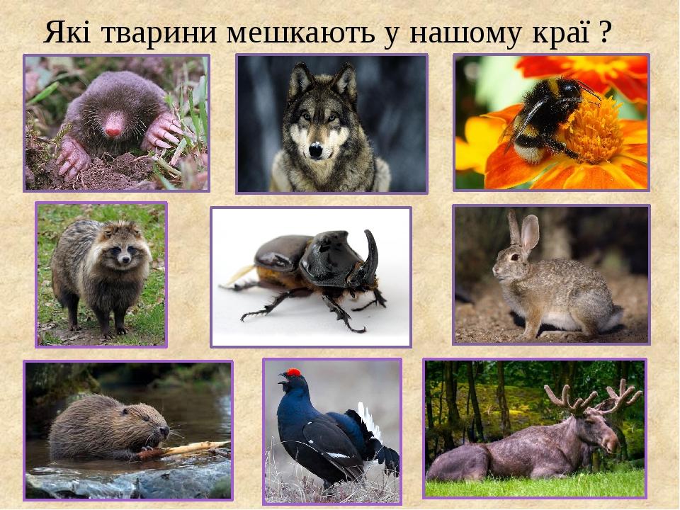 Які тварини мешкають у нашому краї ?