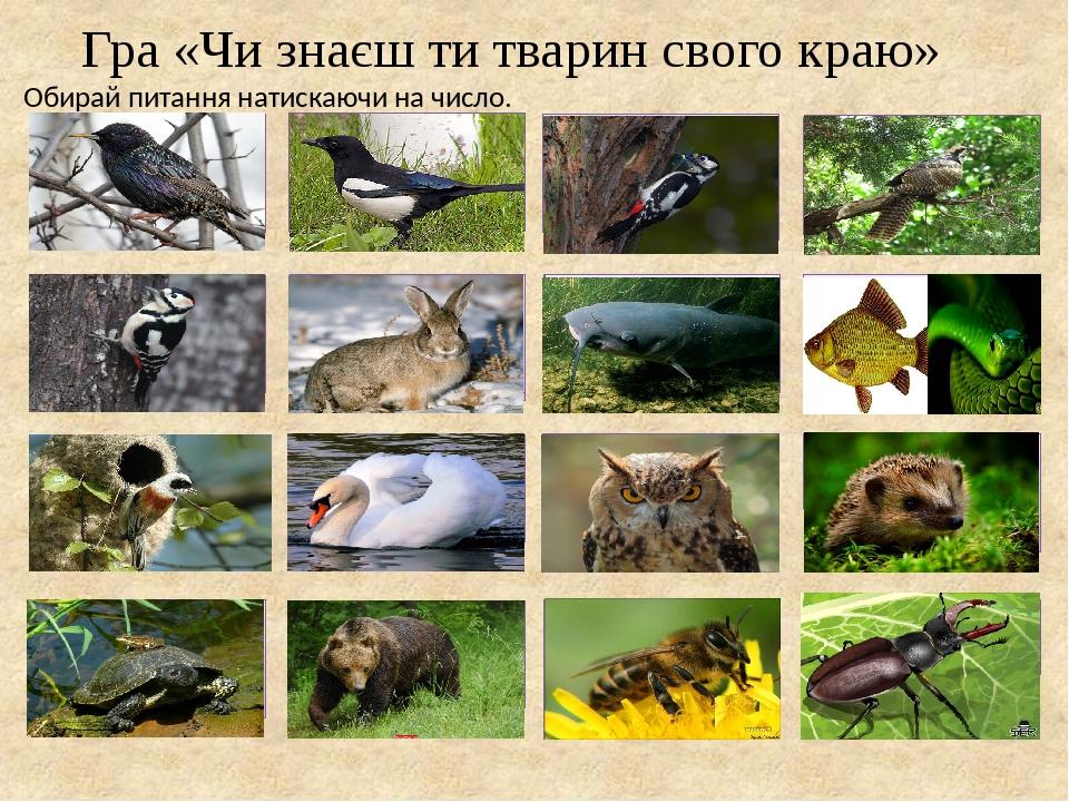 Гра «Чи знаєш ти тварин свого краю» Обирай питання натискаючи на число. Які птахи прилітають до нас першими? У назві якого птаха читаємо число соро...