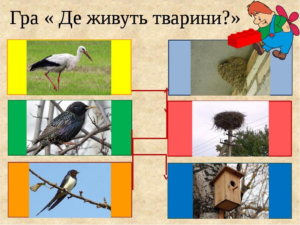 Гра « Де живуть тварини?» Гра « Де живуть тварини?»
