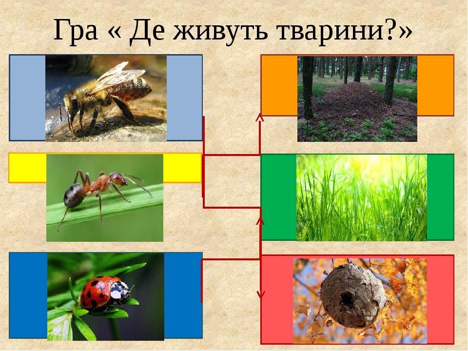 Гра « Де живуть тварини?»