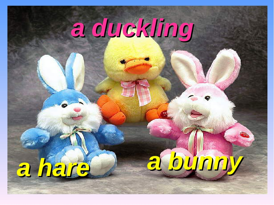 a duckling a hare a bunny