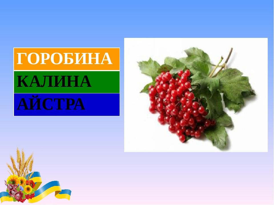 ГОРОБИНА КАЛИНА АЙСТРА