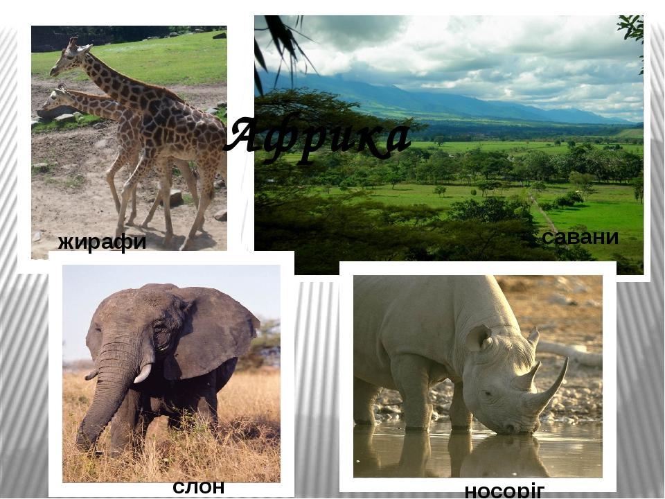 Африка жирафи слон носоріг савани