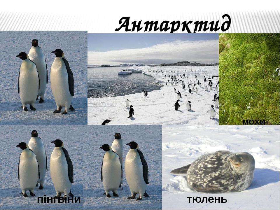 Антарктида пінгвіни тюлень мохи