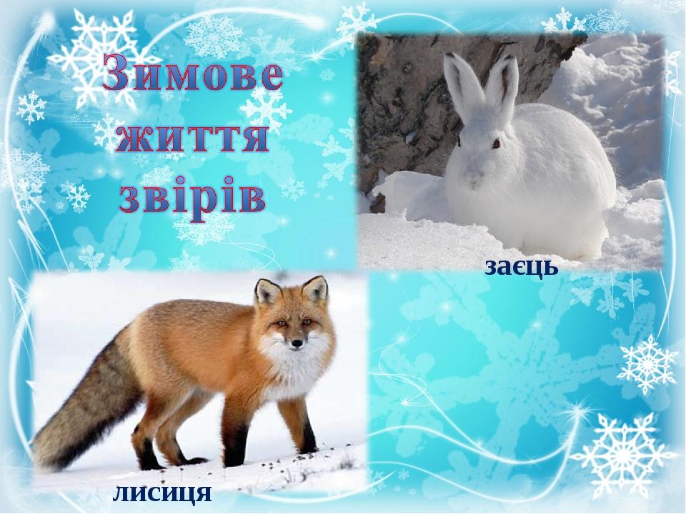 заєць лисиця