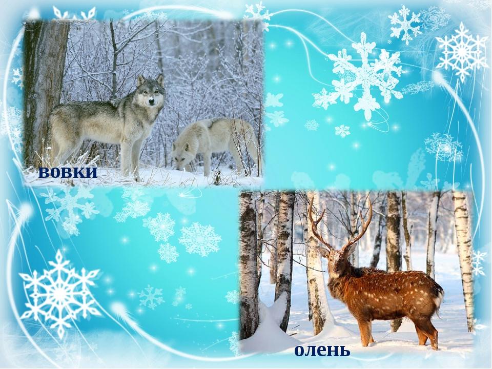 вовки олень