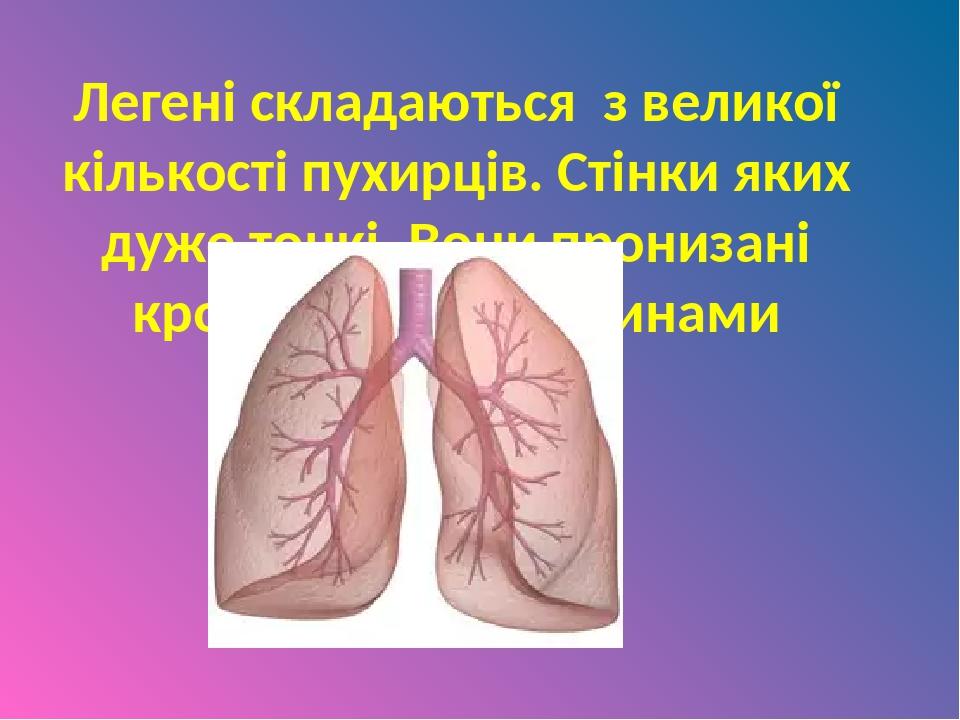 Легені складаються з великої кількості пухирців. Стінки яких дуже тонкі. Вони пронизані кровоносними судинами