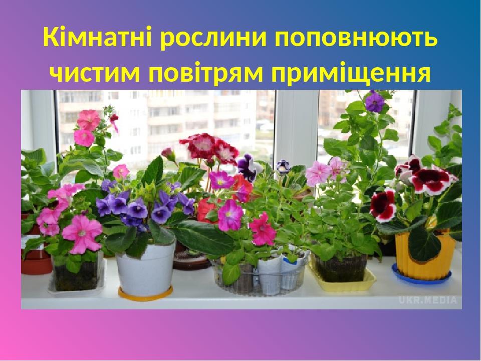 Кімнатні рослини поповнюють чистим повітрям приміщення