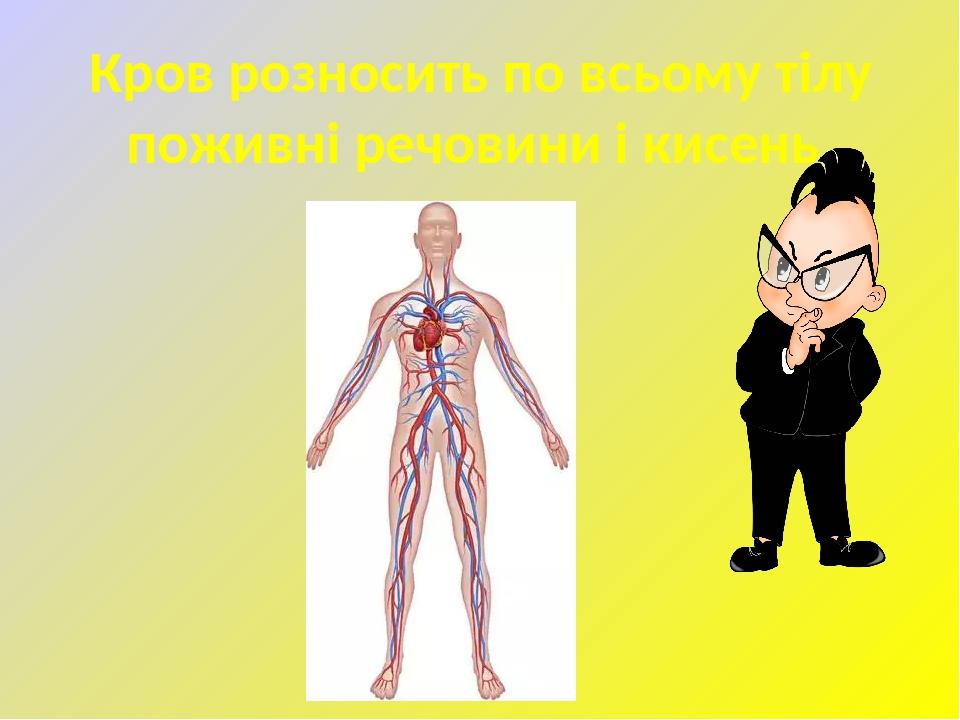 Кров розносить по всьому тілу поживні речовини і кисень.