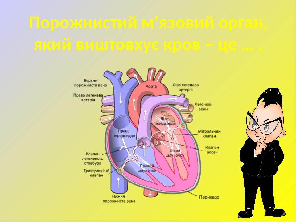 Порожнистий м'язовий орган, який виштовхує кров – це … .