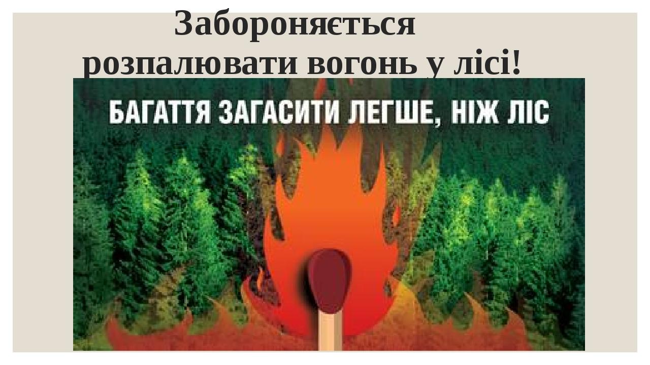 Забороняється розпалювати вогонь у лісі!