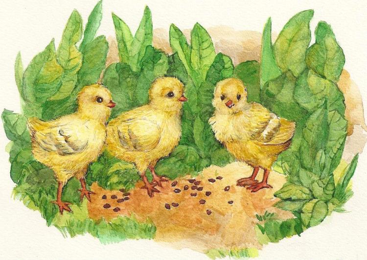Картинки цыплята рисуем