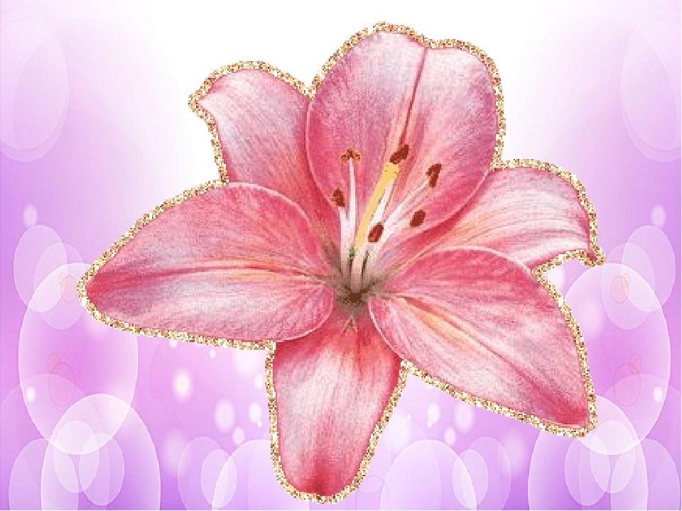 Родителям, картинка лилии для детей