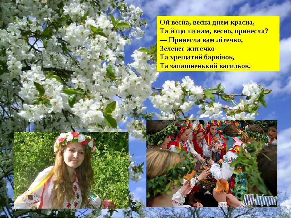 Ой весна, весна днем красна, Та й що ти нам, весно, принесла? — Принесла вам літечко, Зеленеє житечко Та хрещатий барвінок, Та запашненький васильок.