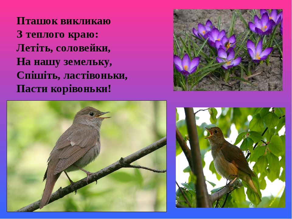 Пташок викликаю З теплого краю: Летіть, соловейки, На нашу земельку, Спішіть, ластівоньки, Пасти корівоньки!
