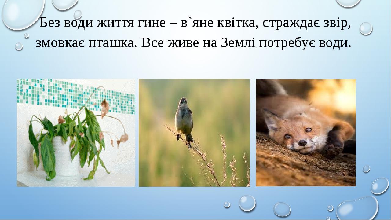 Без води життя гине – в`яне квітка, страждає звір, змовкає пташка. Все живе на Землі потребує води.
