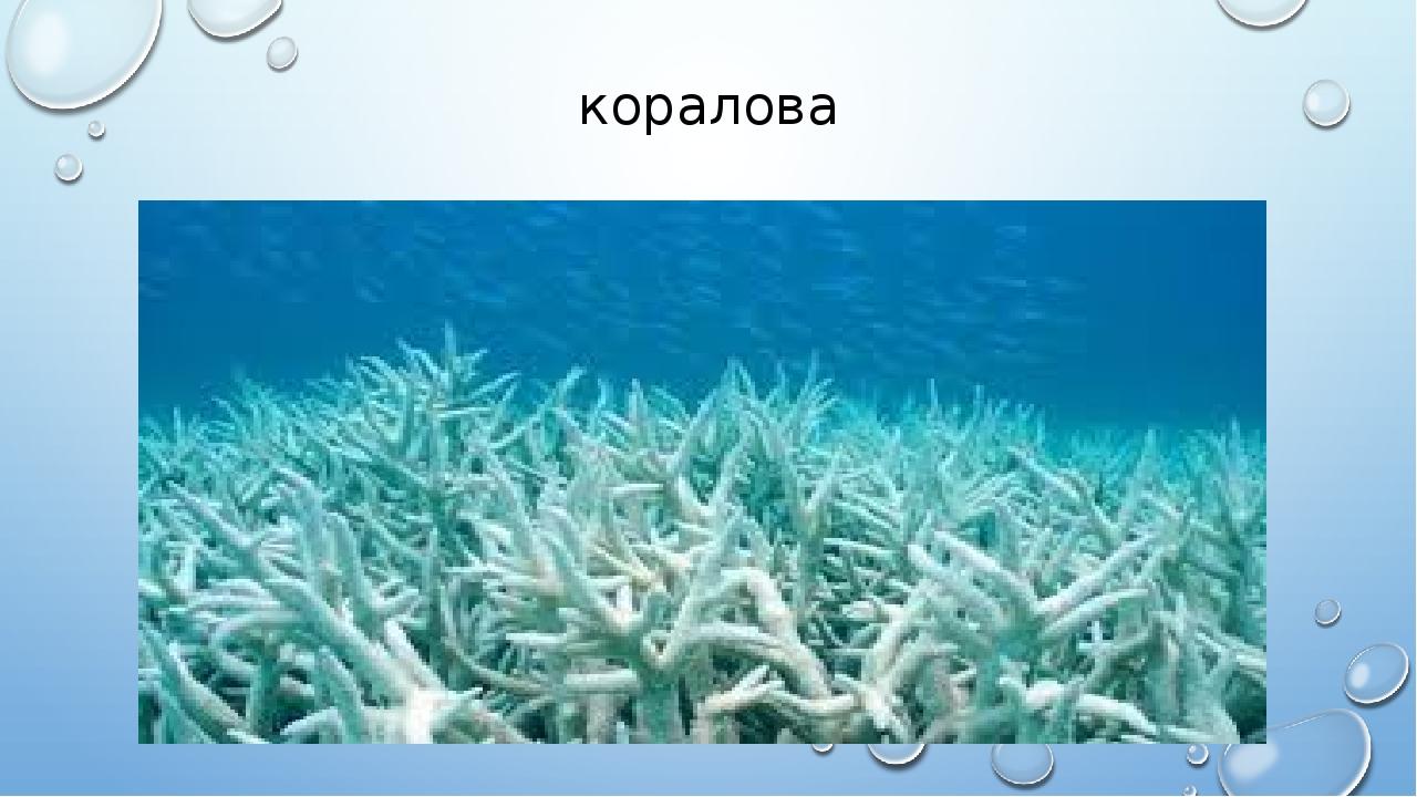 коралова