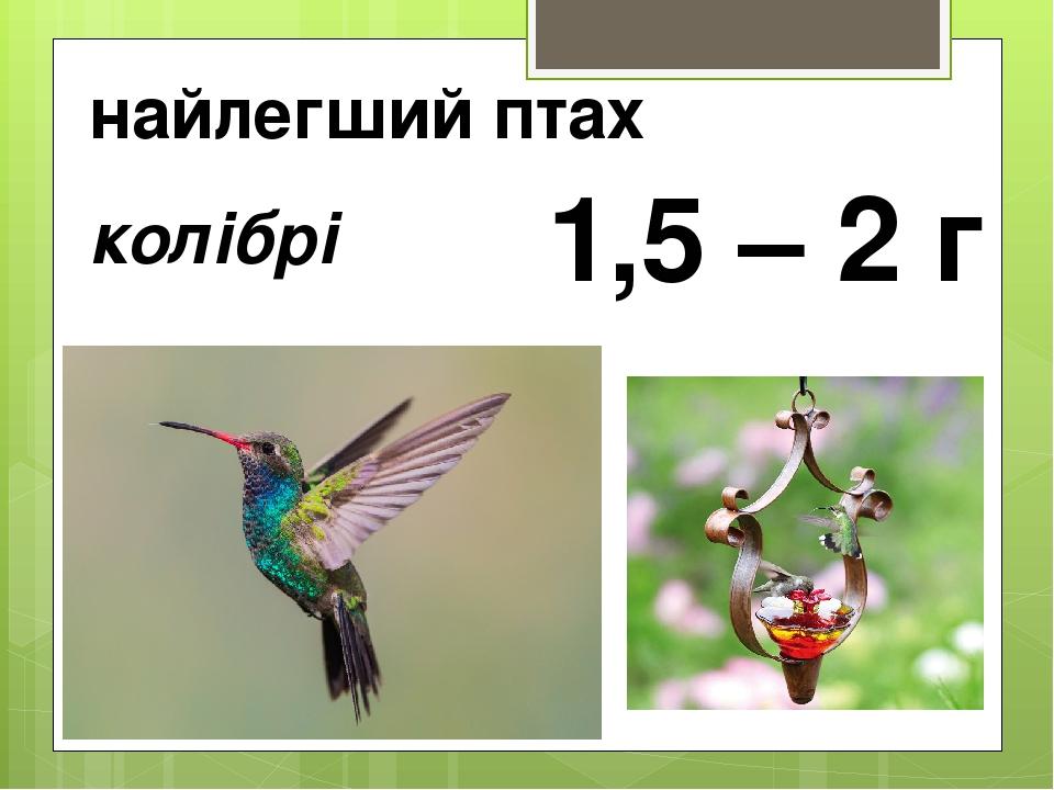 найлегший птах колібрі 1,5 – 2 г