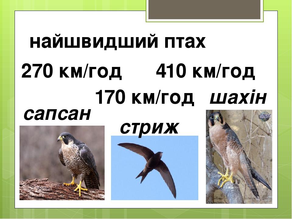 найшвидший птах сапсан шахін 410 км/год 270 км/год стриж 170 км/год