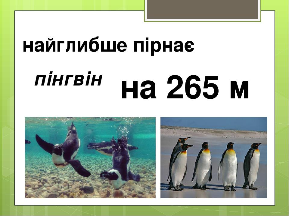 найглибше пірнає пінгвін на 265 м