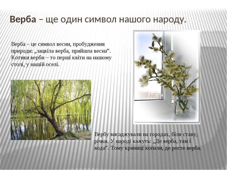 """Верба – ще один символ нашого народу. Верба – це символ весни, пробудження природи: """"зацвіла верба, прийшла весна"""". Котики верби – то перші квіти н..."""