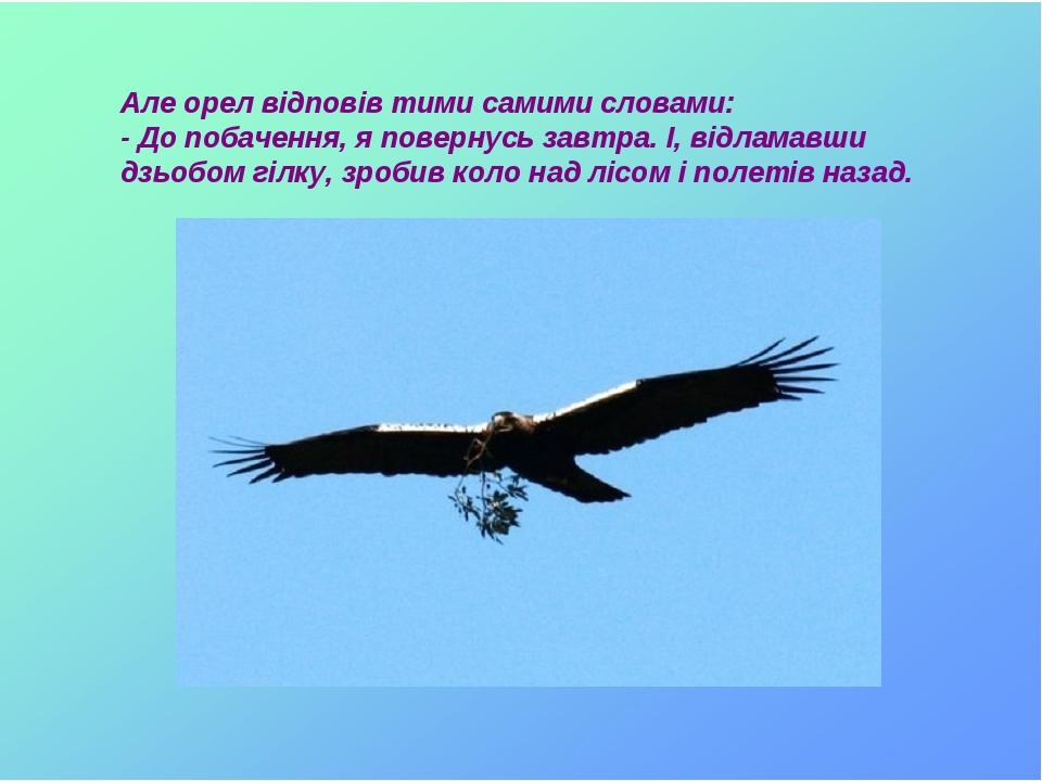 Але орел відповів тими самими словами: - До побачення, я повернусь завтра. І, відламавши дзьобом гілку, зробив коло над лісом і полетів назад.