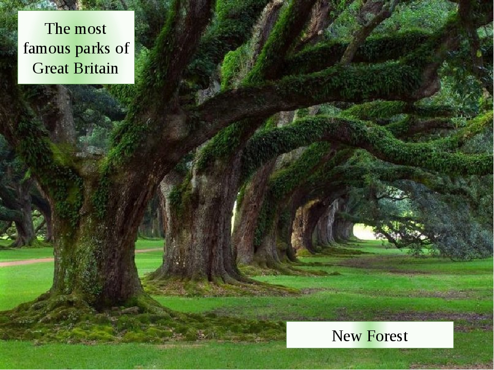 The most famous parks of Great Britain New Forest